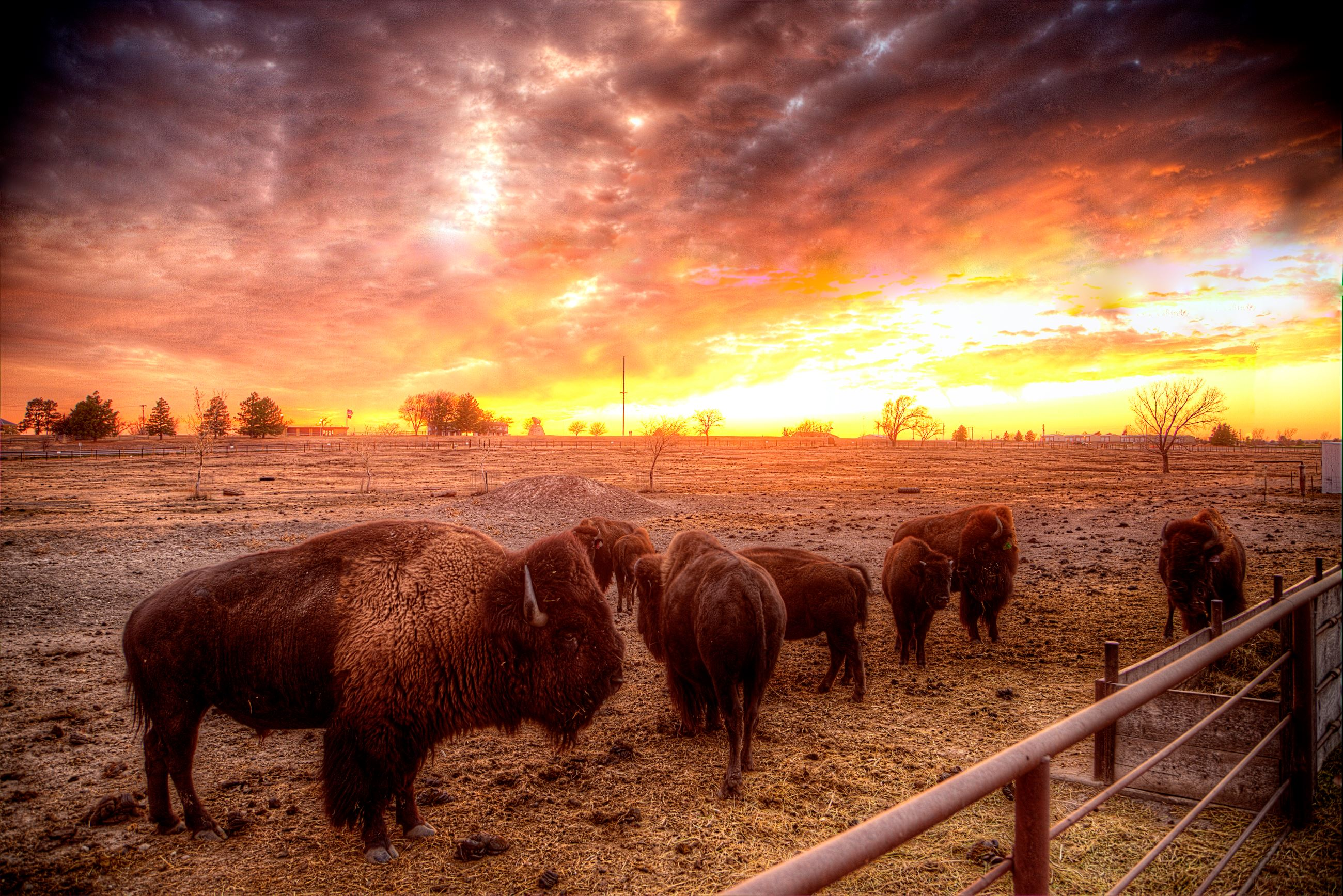 Bison Pens in the Sunset