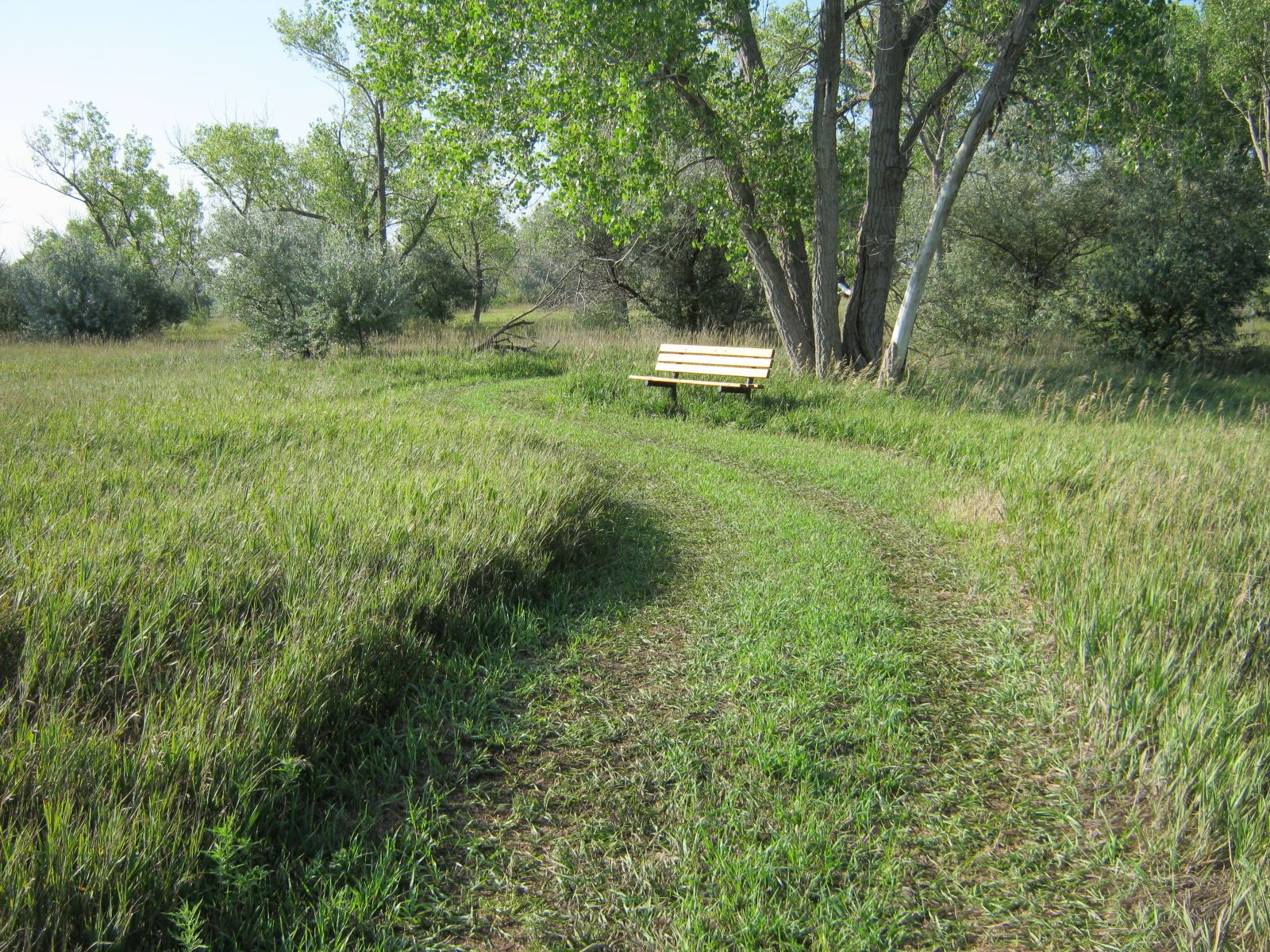Vineyard Trail Bench