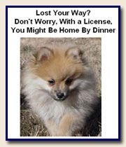 Pet License Flyer